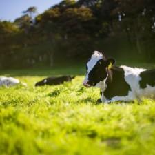 Fibrenamics e INOVA apresentam projeto inovador para desenvolvimento de fibras a partir do leite não alimentar produzido nos Açores