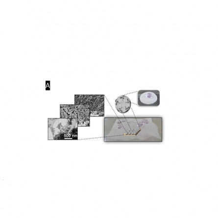 Bacterial Cellulose Membrane with Functional Properties