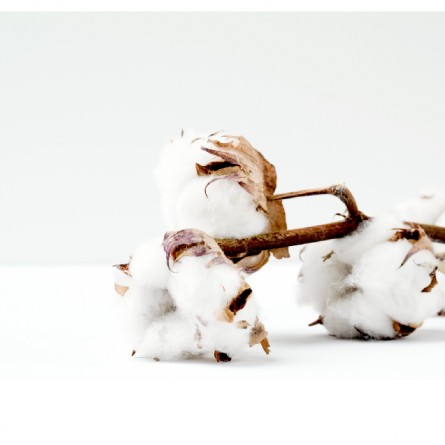 Influence of the addition of fibers in different phases of the spinning process on the behaviour of cotton blended yarns