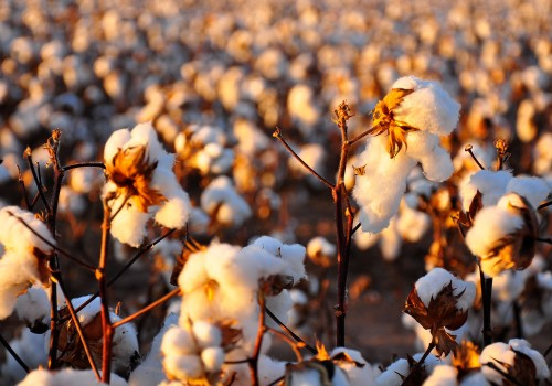 Natural Fibers: A driver for innovation and sustainability